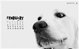 February 2010 Calendar Wallpaper creative #14