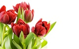Large tulip wallpaper (2) #3