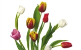 Large tulip wallpaper (3) #12