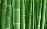 Green bamboo wallpaper albums #43439