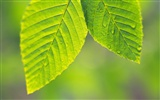 Green leaf photo wallpaper (4)
