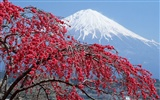 Mount Fuji, Japan Wallpaper (1)
