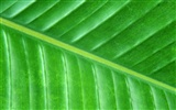 Green leaf photo wallpaper (6) #2