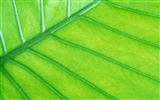 Green leaf photo wallpaper (6) #7