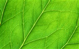 Green leaf photo wallpaper (6) #20