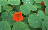 1680 flowers green leaf background wallpaper (4)