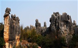Stone Forest in Yunnan line (2) (Khitan wolf works) #24