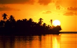 Palm tree sunset wallpaper (2)