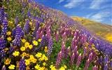 Но каждый цветёт по-своему - вот высший подвиг цветка!