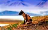 National Geographic animal wallpaper album (2)