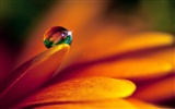 HD wallpaper flowers and drops of water #54226