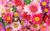 Widescreen wallpaper flowers close-up (12)
