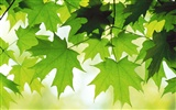 Large green leaves close-up flower wallpaper (2)