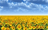 Beautiful sunflower close-up wallpaper (1) #60656