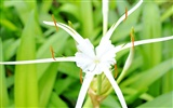 Macro Flower Grass (1) (genzhukou works) #18