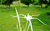 Macro Flower Grass (2) (genzhukou works) #19