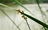 Macro Flower Grass (2) (genzhukou works) #28