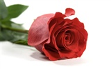 Large Rose Photo Wallpaper (6) #8