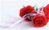 Large Rose Photo Wallpaper (6) #17