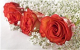 Large Rose Photo Wallpaper (6) #18