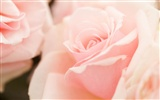Widescreen wallpaper flowers close-up (14) #10