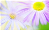 Widescreen wallpaper flowers close-up (14) #15