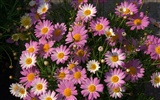 Widescreen wallpaper flowers close-up (16) #2