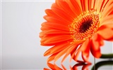 Widescreen wallpaper flowers close-up (21)