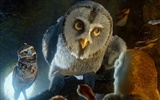 Legend of the Guardians: The Owls of Ga'Hoole 守卫者传奇(二)29
