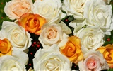 Rose Photo Wallpaper (6) #2
