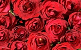 Rose Photo Wallpaper (6) #3