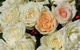 Rose Photo Wallpaper (6) #5