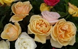 Rose Photo Wallpaper (6) #13