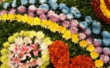 Colorful flowers decorate wallpaper (4)