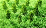 Green and Natural Wallpaper (4) #13
