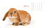 Year of the Rabbit 2011 calendar wallpaper (1)