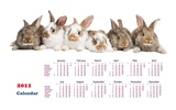 Year of the Rabbit 2011 calendar wallpaper (1) #19
