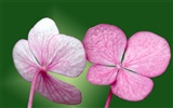Pairs of flowers and green leaves wallpaper (1)