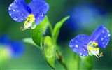 Pairs of flowers and green leaves wallpaper (2) #10