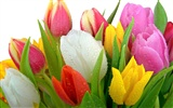 Widescreen wallpaper flowers close-up (32) #2