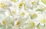 Widescreen wallpaper flowers close-up (32) #3