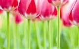 Widescreen wallpaper flowers close-up (32) #6