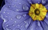 Widescreen wallpaper flowers close-up (32) #11