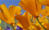 Widescreen wallpaper flowers close-up (32) #13
