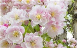 Widescreen wallpaper flowers close-up (32) #19