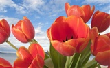 Widescreen wallpaper flowers close-up (32) #20