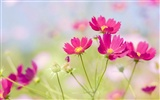 Widescreen wallpaper flowers close-up (33) #1