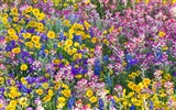 Widescreen wallpaper flowers close-up (33) #10