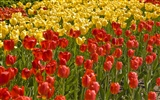 Widescreen wallpaper flowers close-up (33) #16
