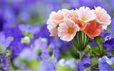 Widescreen wallpaper flowers close-up (33) #17